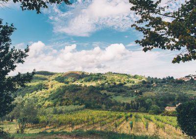 Castello di Cafaggio Vigna