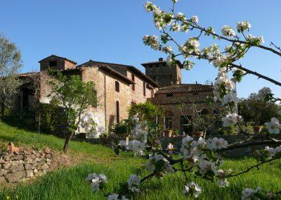 Castello di Cafaggio Ciliegio